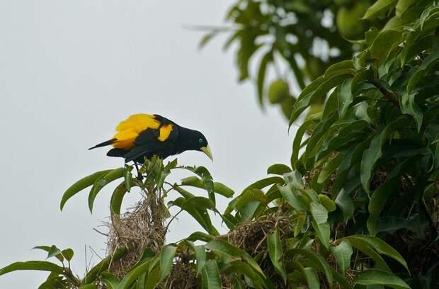 Amazonas24 Большое фотопутешествие по лесам Амазонки