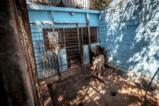 """Ветеринары, посетившие объект, стали свидетелями """"худших условий содержания животных"""", которые они когда-либо видели Four Paws, Албания, животные, зоопарк, организация, спасение, фото"""