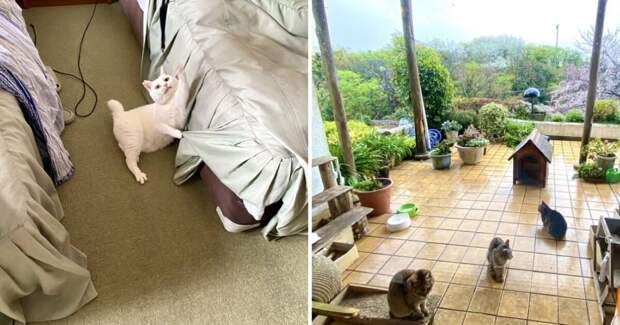 Как устроен первый вмире отель для любителей кошек