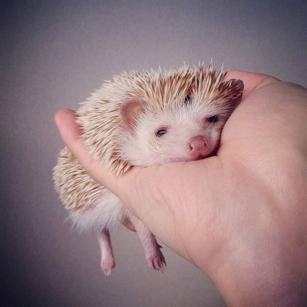 famousanimals03 Топ 10 самых популярных животных в Instagram