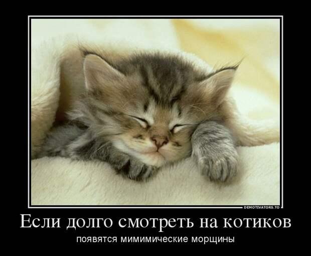 Подборка веселых демотиваторов для поднятия настроения (11 фото)