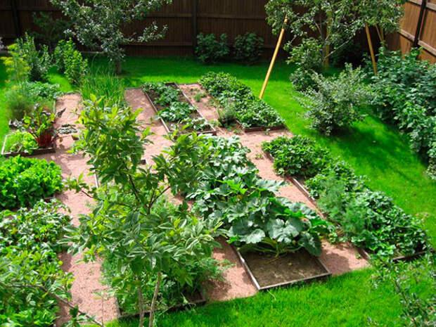 Эти 10 копеечных аптечных средств творят чудеса в огороде и цветнике