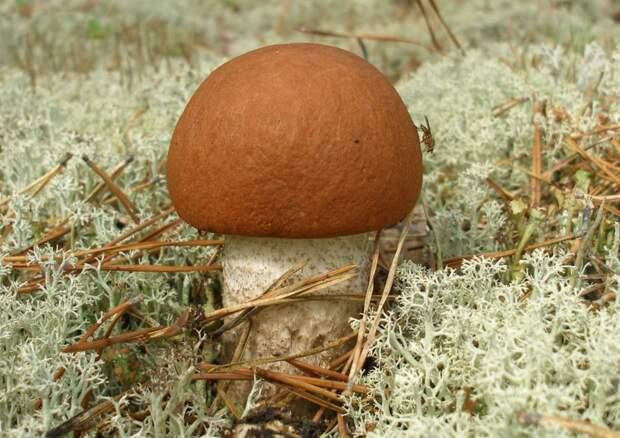 Отрава или средство от всех болезней? Полезные и опасные свойства грибов