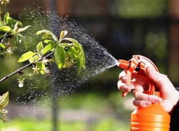 ботва томатов от вредителей
