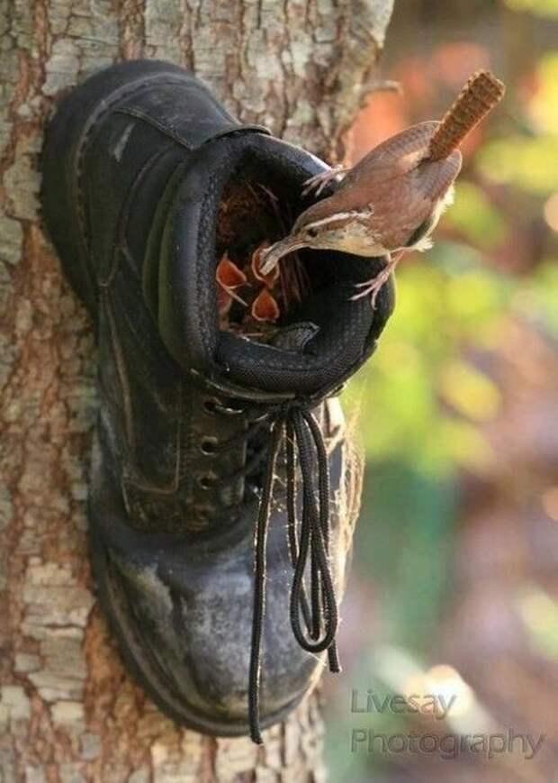 Куда применить старую обувь