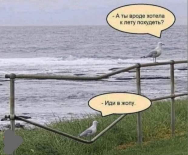 Смешные картинки изсоцсетей