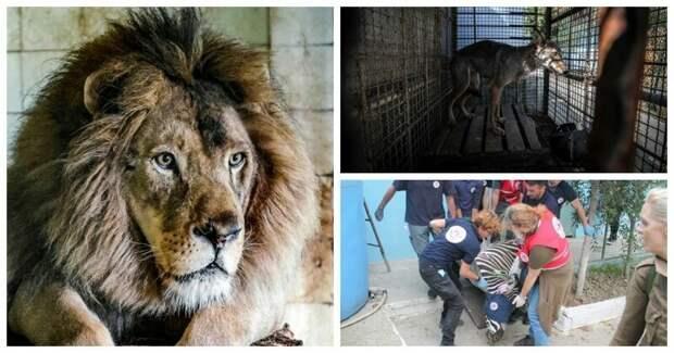 """Зоозащитники спасли обитателей """"худшего зоопарка мира"""" Four Paws, Албания, животные, зоопарк, организация, спасение, фото"""