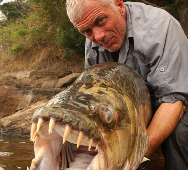 Рыбак в Африке выловил огромную пиранью, которая может нападать даже на крокодилов