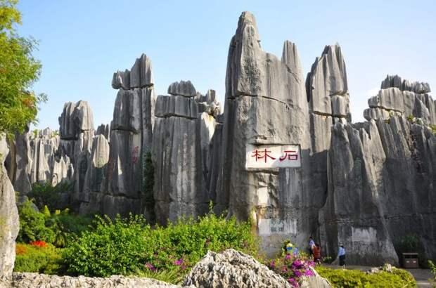 kamenniles 7 800x530 Чудеса света: каменный лес Шилинь в Китае