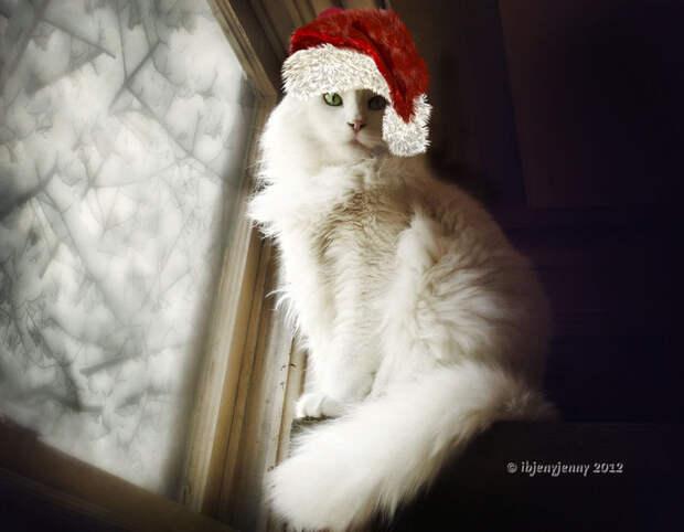 3166706_meowy_christmas_by_ibjennyjennyd5lr1t2 (700x545, 58Kb)