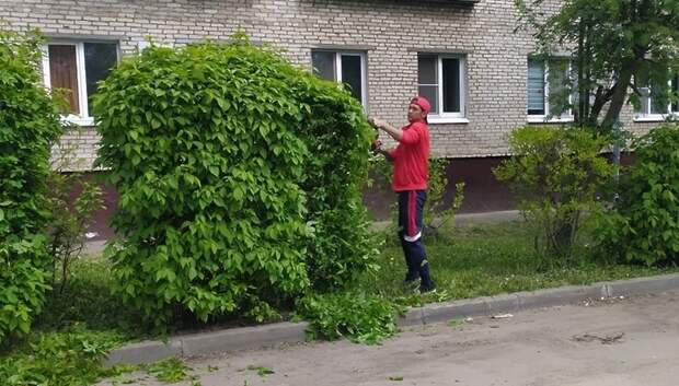 Во дворах Подольска начали обрезать кусты в рамках весенних работ