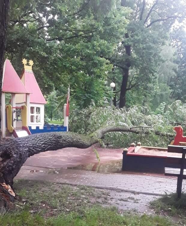 Упавшее на детскую площадку в Лианозове дерево оперативно убрали
