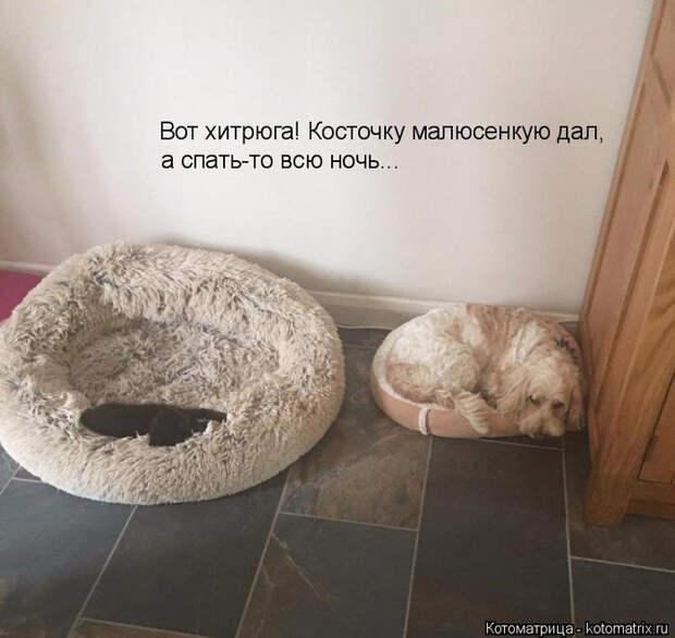 kotomatritsa_h4 (700x661, 305Kb)
