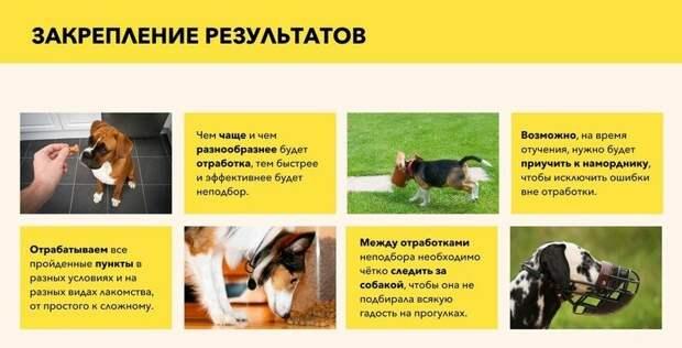 Как за 6 этапов навсегда отучить собаку подбирать с земли всякую гадость. Подробная статья