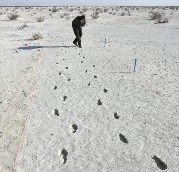Самая длинная дорожка из доисторических следов. /Фото:arstechnica.net