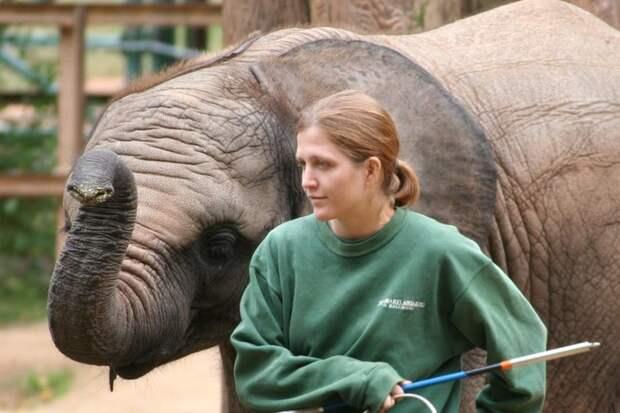 Работник зоопарка вонь, запах, необычная работа, плохо пахнет, профессии