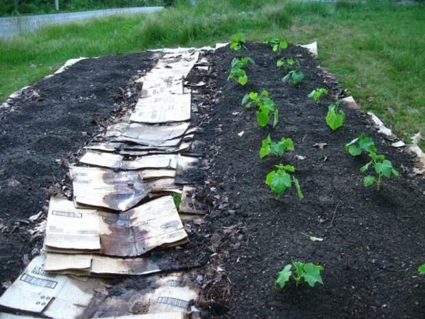 Садовые дорожки из картона