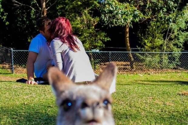 Подборка смешных и забавных картинок и фото приколов из сети