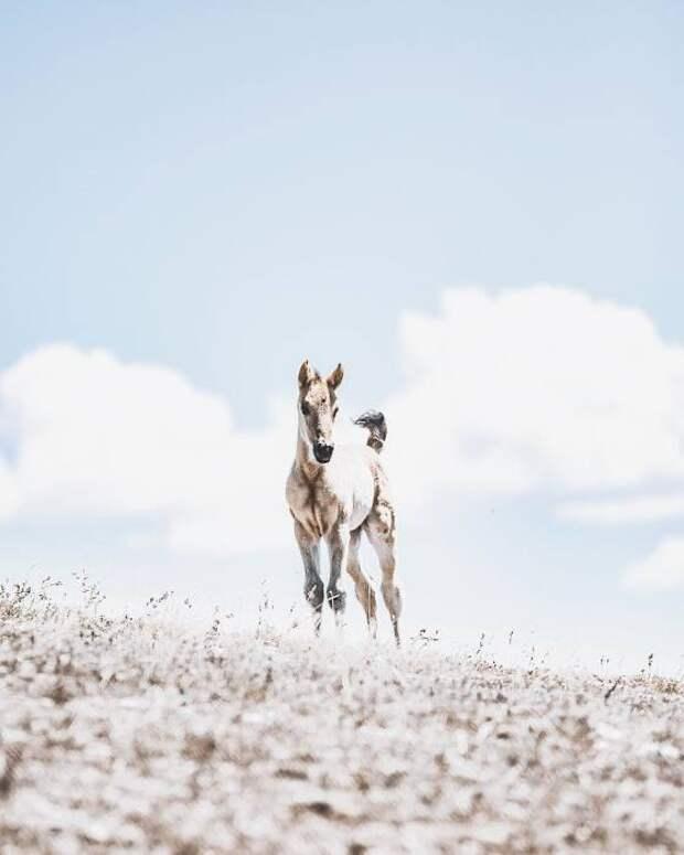 Небесный конь. Автор: Donal Boyd.