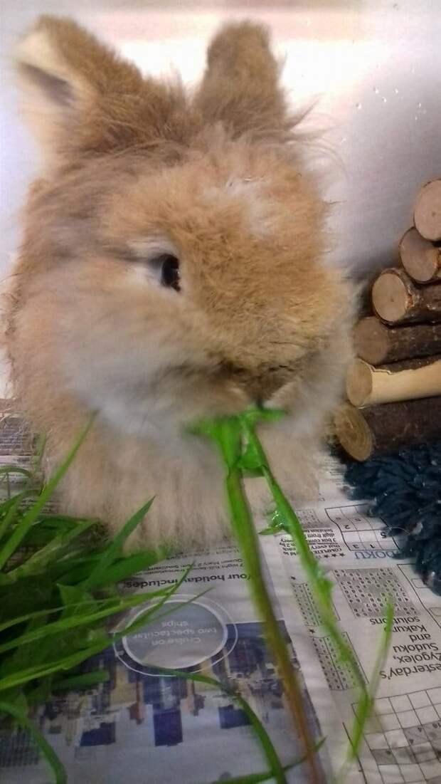 «Их кролик почти превратился… в мамонта!» Пол — не понятен, зубы — по пояс… Что происходит?!
