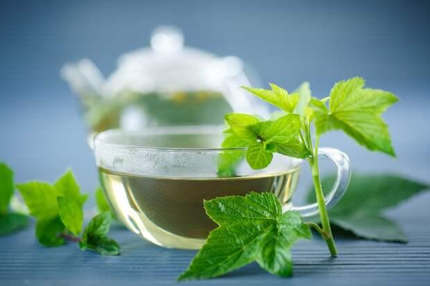 свойства чая из листьев черной смородины