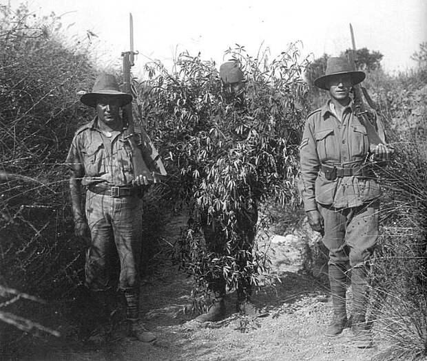 Первая Мировая. Турецкий снайпер, захваченный австралийскими солдатами. Снайпер замаскирован... под куст конопли Весь Мир, история, фотографии