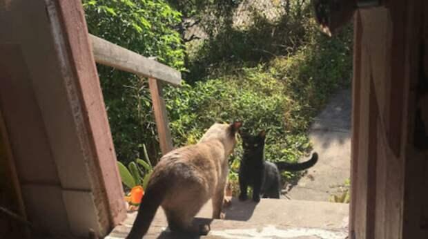 Бездомная кошка в 5 утра пришла к чужому дому и начала плакать. Когда ей открыли, она юркнула внутрь…