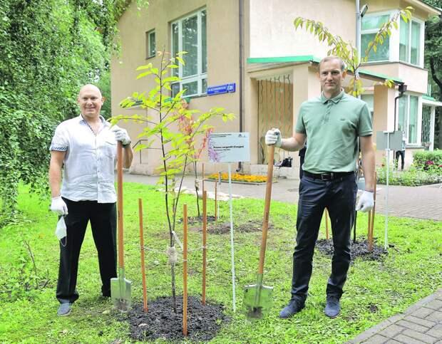 Космонавт Олег Артемьев и префект Алексей Беляев считают высадку этих деревьев очень символичной