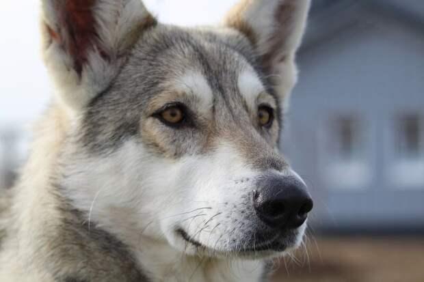 Собаки способны выявить наличие рака у хозяина