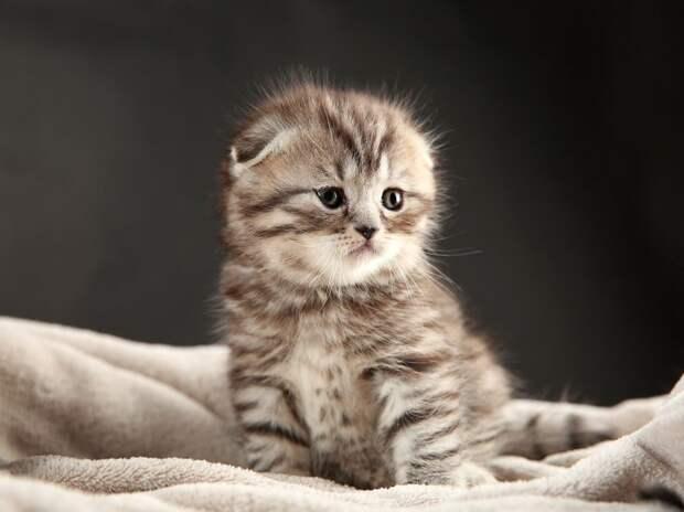 «Дорогая, наш кот — девочка!»