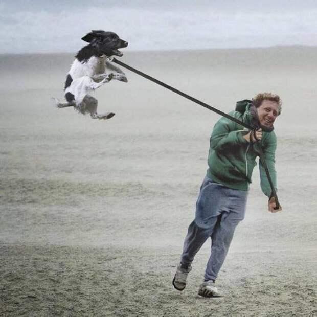 Ни какая погода не может помешать прогулке! животные, картинки, прикол, собаки, собачники, фото, юмор