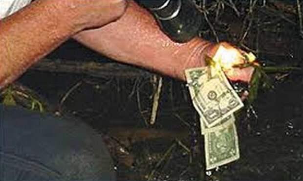Бобры нашли сумку с украденными деньгами и построили из них плотину