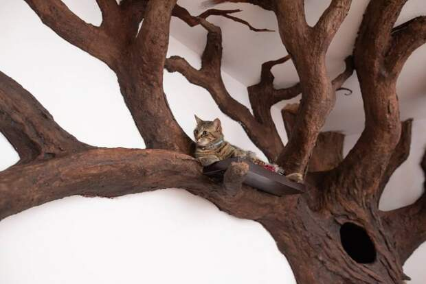 Дерево для кота diy