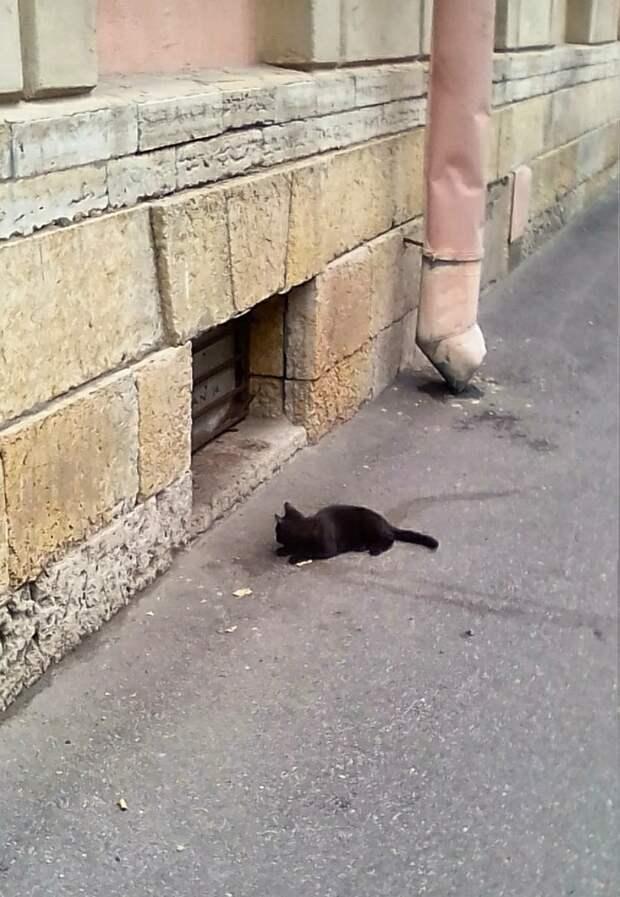Друзья, пожалуйста, отзовитесь! Доверчивому малышу опасно на улице..Помогите, хотя бы временным домом!