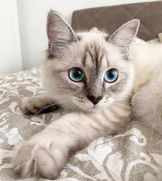 """500+ The """"Eyes"""" Have It ideas 