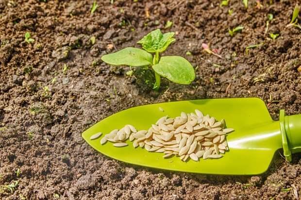 Как повлиять на качество своих семян