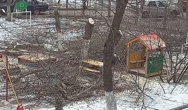 Спиленные вдетсаду деревья возмутили жителей Ростова