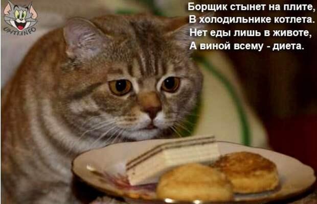 Смешные картинки про диету с надписями (15 фото)