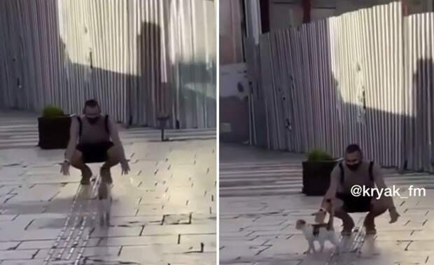 «Размечтался, кожаный»: хозяин захотел обнять кота, но не тут-то было