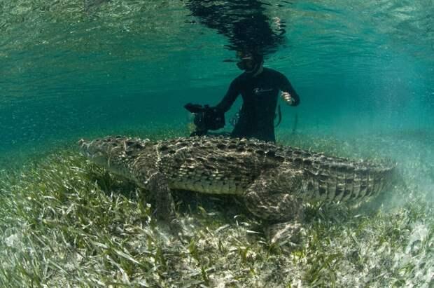 Подводная прогулка с крокодилами