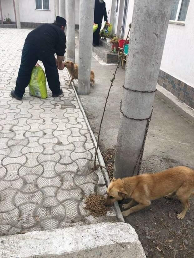 18 собачек оказались привязаны к столбам тугими цепями… Но человек решил, что сделал все правильно