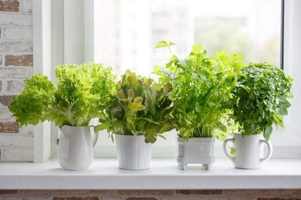 Попробуйте выращивать зелень на своем подоконнике Рассказываю как