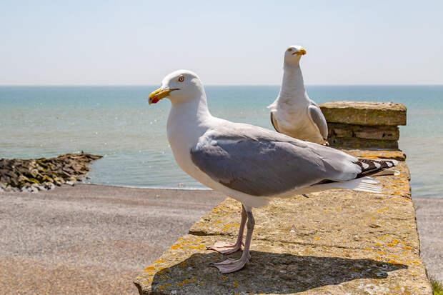 Умные чайки подстраивают жизнь под человеческий график дня