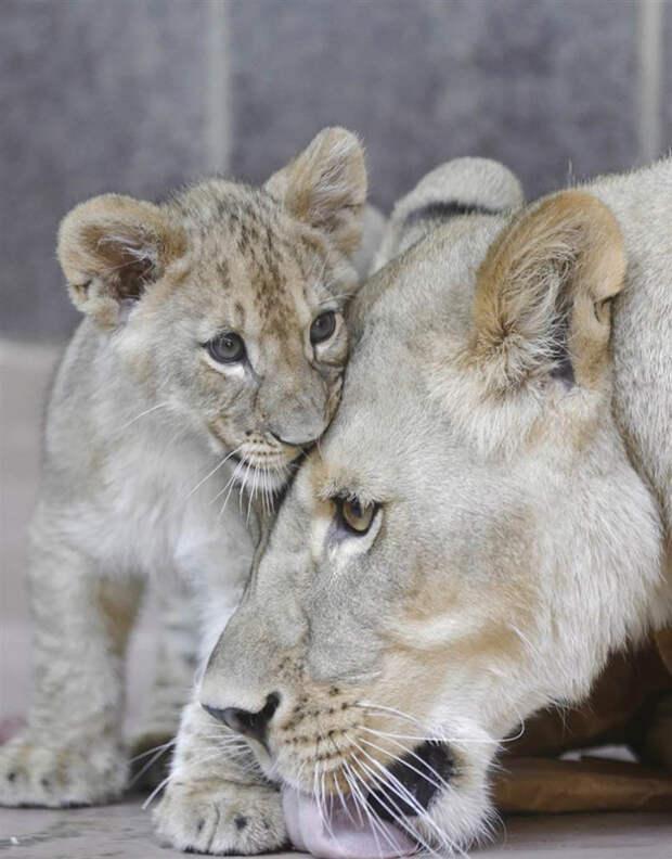 Эти забавные животные. /Фото/.