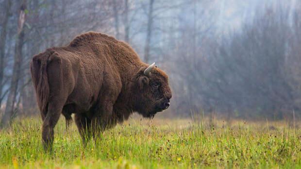 10 существ, которых люди спасли от полного вымирания