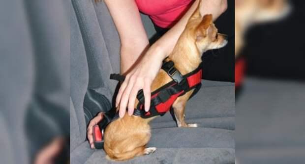 Водителей оштрафуют за перевозку кошек и собак в авто