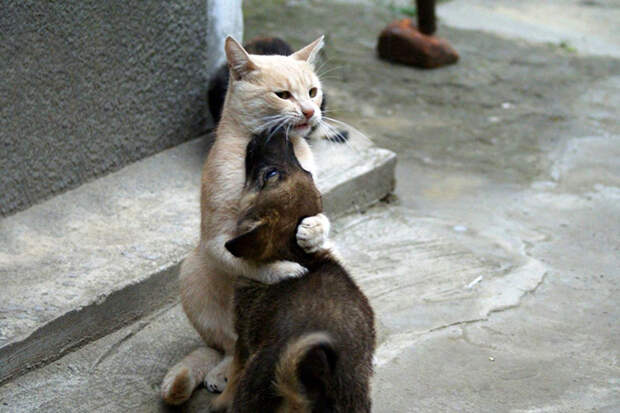 Кот по прозвищу «Папа Тереза»
