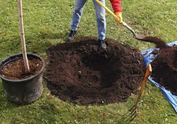 9 полезных советов для качественного садоводства