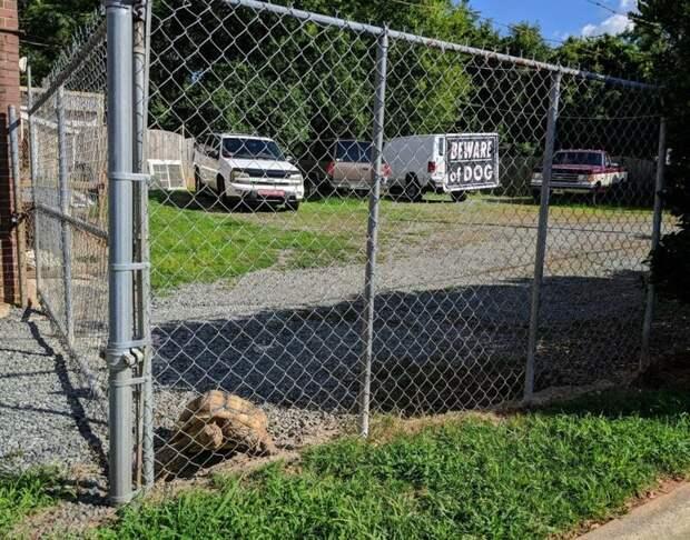 14. Осторожно, черепахи могут быть очень непредсказуемыми! животные, кошка, прикол, собака, табличка, умора, юмор