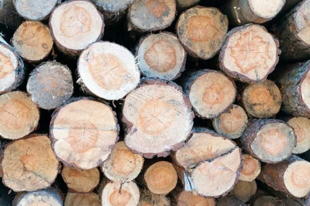 Двое жителей Удмуртии вырубили на территории природного парка деревья на 1,5 млн рублей